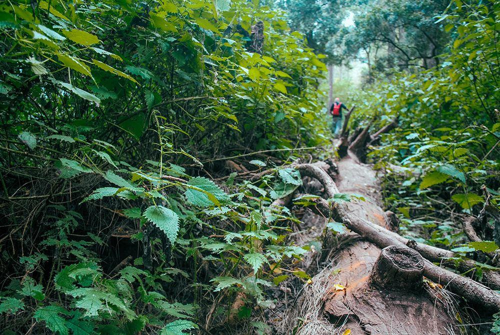 Paket Trekking Tambora Via Pancasila